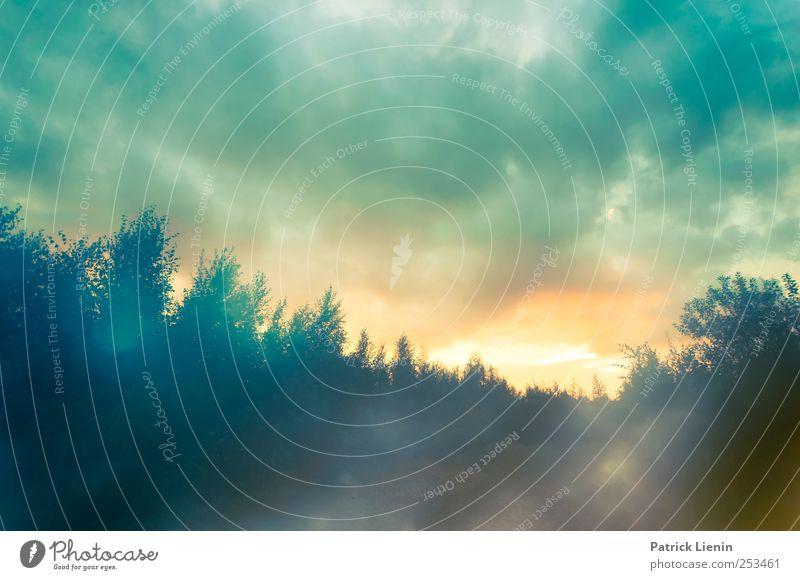 In Your Nature Himmel Natur Baum Pflanze Sonne Wolken Wald Umwelt Landschaft Luft Stimmung träumen Wetter Angst Klima gefährlich