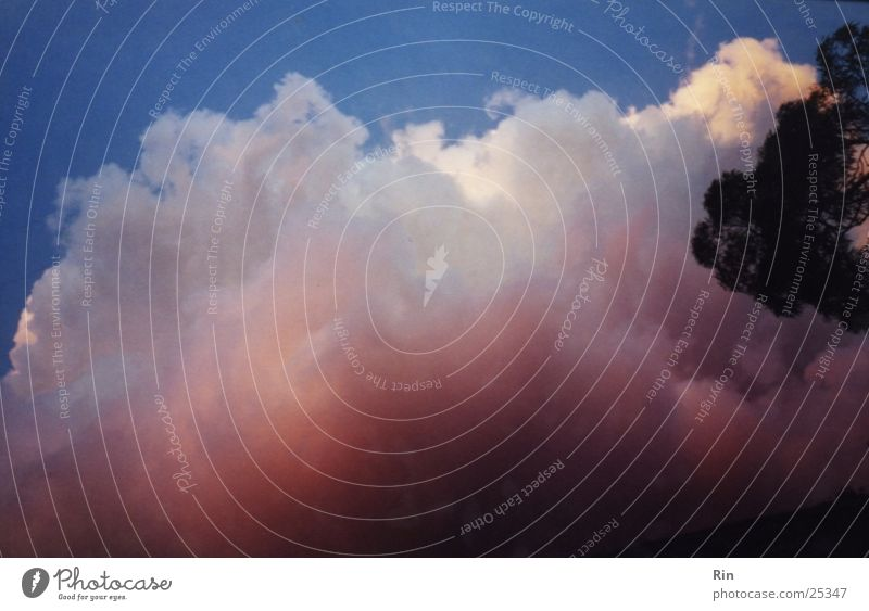 Zuckerwatte oder Wolke? Himmel Baum blau Wolken rosa