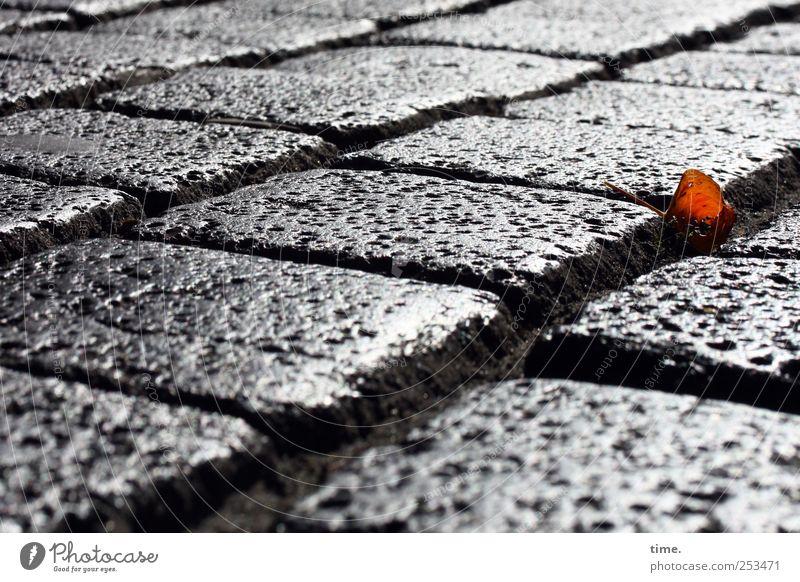 Herbstlein Umwelt Erde Blatt Straße Stein glänzend Pflastersteine Kopfsteinpflaster Fuge verlegen Straßenbelag Farbfoto Gedeckte Farben Nahaufnahme