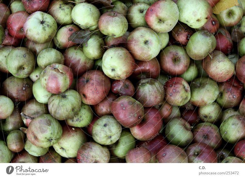 was aus den guten Äpfeln wurde... Lebensmittel Frucht Apfel Ekel kalt grün rot Kompost Schimmelpilze zerfressen gammeln verschimmeln Farbfoto Außenaufnahme Tag