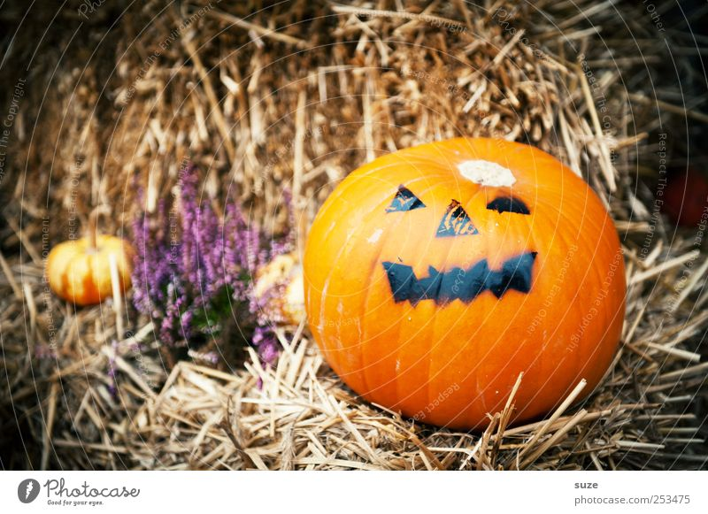 Mr. Green Freude Gesicht Herbst lustig Feste & Feiern orange Lebensmittel Dekoration & Verzierung rund Gemüse gruselig Bioprodukte Tradition Grimasse herbstlich Halloween