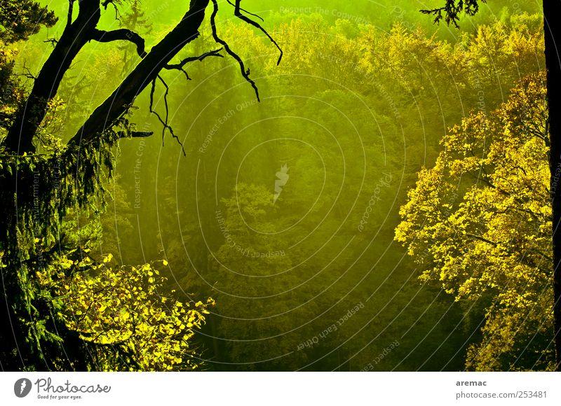 Grüne Hölle Natur Landschaft Pflanze Sonnenlicht Herbst Schönes Wetter Nebel Baum Park Wald grün Gefühle Stimmung Vergänglichkeit Ast Farbfoto Gedeckte Farben