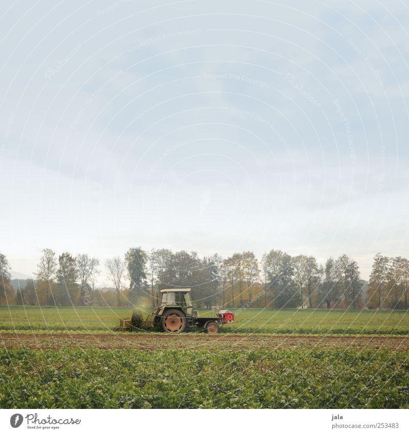 traktor Landwirtschaft Forstwirtschaft Umwelt Natur Landschaft Himmel Herbst Pflanze Baum Grünpflanze Nutzpflanze Feld Traktor natürlich Farbfoto Außenaufnahme