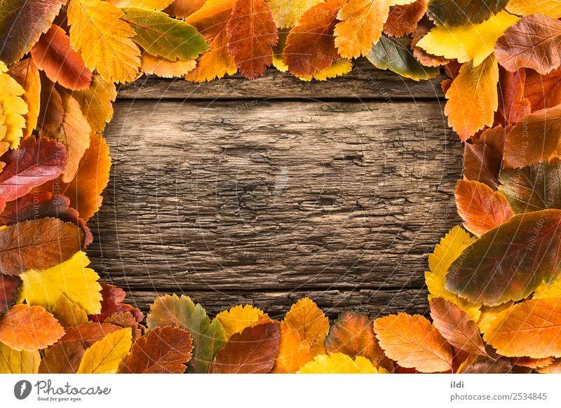 Herbstblätter bilden einen Rahmen Natur Pflanze Blatt Holz natürlich fallen farbenfroh Textfreiraum rustikal konzeptionell orange Wandel & Veränderung gefallen