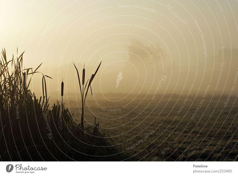 Leb wohl liebe Oma Umwelt Natur Landschaft Pflanze Herbst Nebel Feld dunkel natürlich Schilfrohr Farbfoto Gedeckte Farben Außenaufnahme Menschenleer Morgen