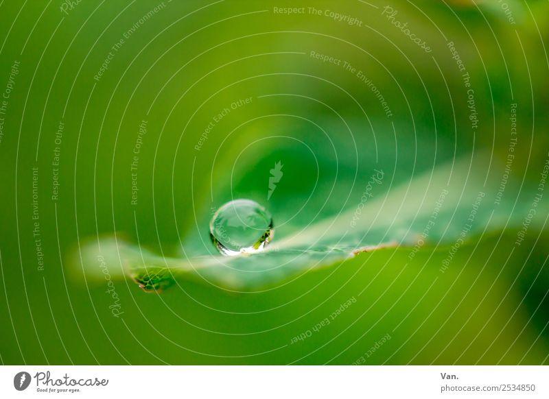 Der Drops ist gelutscht Natur Pflanze Wassertropfen Sommer Regen Blatt Garten frisch nass grün Farbfoto mehrfarbig Außenaufnahme Nahaufnahme Detailaufnahme