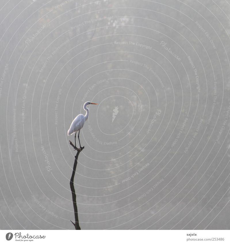 CD - Silberreiher Umwelt Natur Tier Wildtier Vogel 1 stehen warten ästhetisch grau Nebel Nebelwald Farbfoto Gedeckte Farben Außenaufnahme Menschenleer