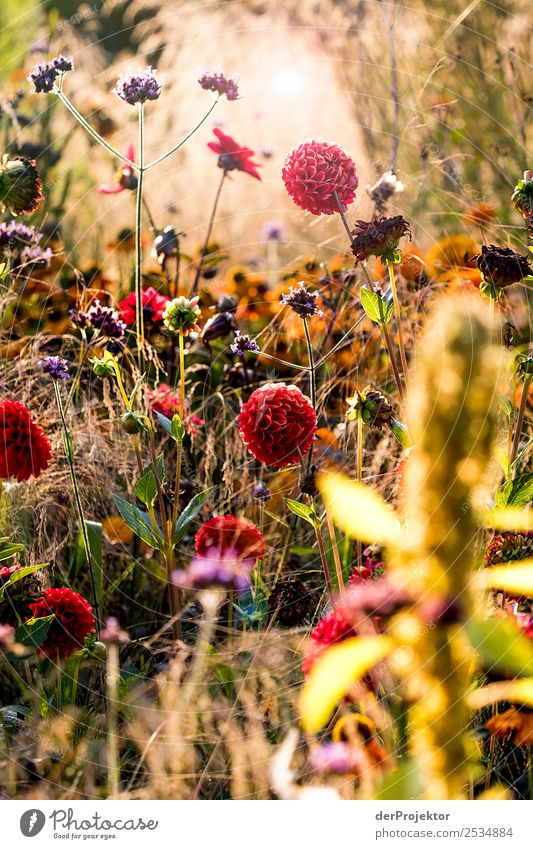 Spätsommerwiese Natur Ferien & Urlaub & Reisen Sommer Pflanze Landschaft Tier Freude Umwelt Wiese Berlin Glück Gras Tourismus außergewöhnlich Ausflug wandern