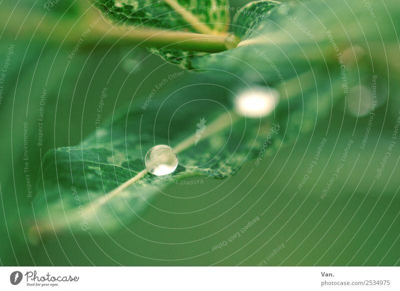 Der Drops ist gelutscht II Natur Pflanze Wassertropfen Sommer Regen Blatt Garten frisch nass grün Farbfoto mehrfarbig Außenaufnahme Nahaufnahme Detailaufnahme