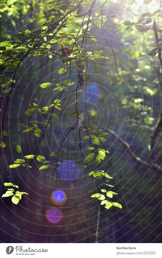 [CHAMANSÜLZ 2011] Sonnenpunkte sammeln Natur Landschaft Sonnenlicht Herbst Baum Blatt Wald Punkt leuchten natürlich blau grün violett rot Stimmung Zufriedenheit