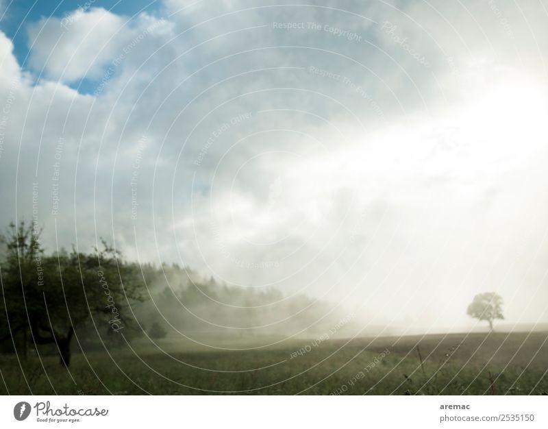 Morgennebel Natur Sommer Pflanze blau grün Landschaft Baum Wald Nebel Feld Frankreich