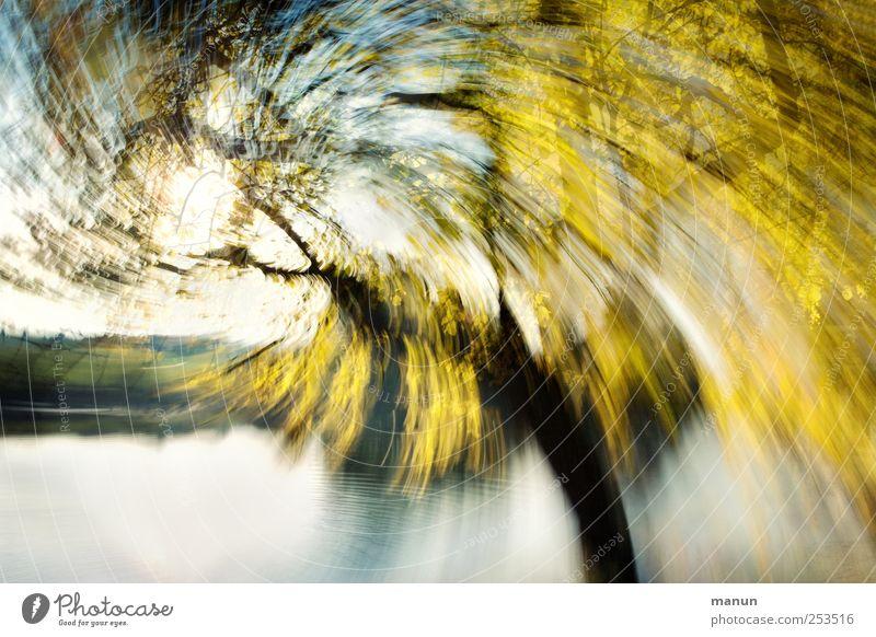 Birkenwirbel Natur Herbst Wind Baum Weide herbstlich Herbstfärbung Herbstwetter Seeufer außergewöhnlich fantastisch verrückt gelb gold bizarr chaotisch Kunst