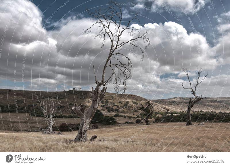 Totholz Umwelt Natur Landschaft Himmel Wolken Sommer Gras Hügel Einsamkeit karg Weide leer Tod Baumstamm Farbfoto Gedeckte Farben Außenaufnahme Menschenleer