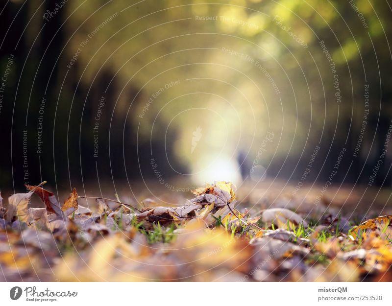 Herbstlauf. Natur Pflanze Blatt Erholung Herbst Umwelt Landschaft Park ästhetisch Spaziergang Herbstlaub Allee herbstlich zeitlos Herbstbeginn Herbstfärbung