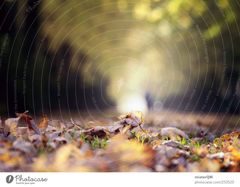 Herbstlauf. Umwelt Natur Landschaft Pflanze ästhetisch Herbstlaub herbstlich Herbstbeginn Herbstfärbung Herbstwald Herbstwetter Herbstlandschaft Blatt Allee