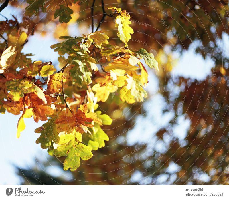 Farbrausch. Natur Baum Pflanze Blatt Herbst Umwelt Landschaft natürlich ästhetisch herbstlich Eiche Färbung Herbstbeginn Herbstfärbung Laubwald Herbstwald
