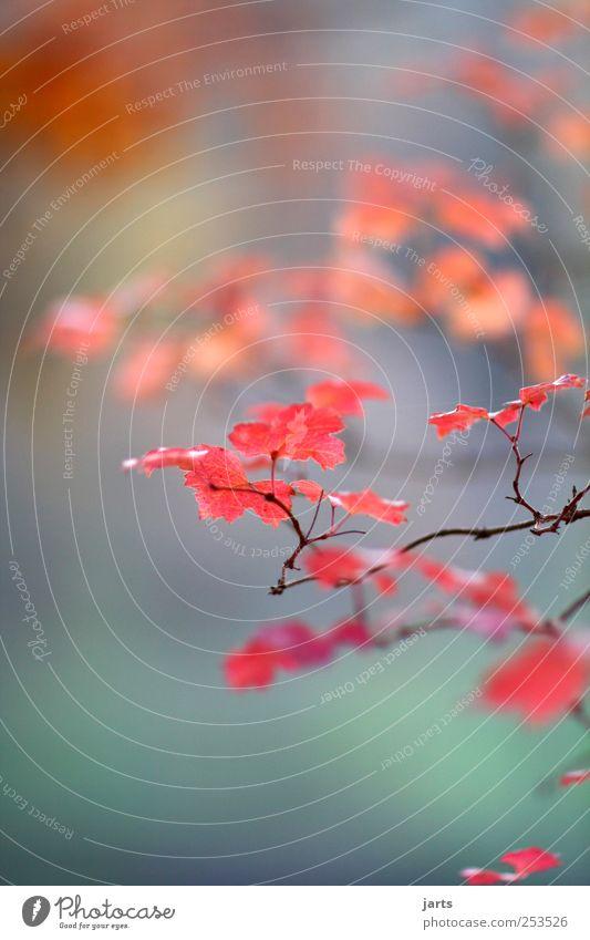 herbst Natur Baum Pflanze Blatt Umwelt Herbst Garten Park natürlich frisch Schönes Wetter exotisch