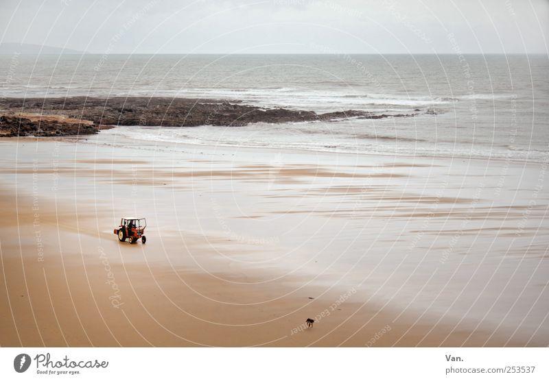 I hol di mit'm Traktor ab... Hund Himmel Natur Wasser Ferien & Urlaub & Reisen Meer Strand Tier Landschaft Sand Küste Horizont Wind Felsen fahren Haustier