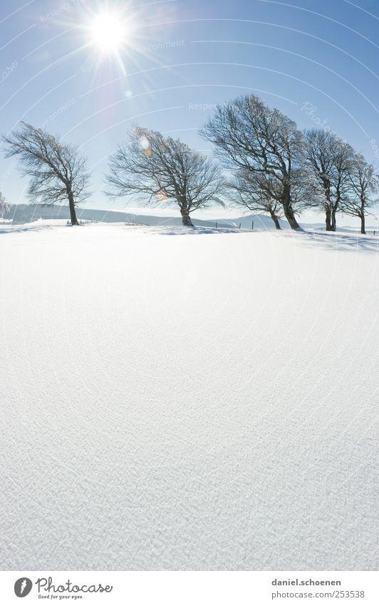 Schauinslandwinterwerbung Himmel Natur blau weiß Baum Winter Schnee Umwelt Berge u. Gebirge Landschaft hell Eis wandern Tourismus Klima Frost