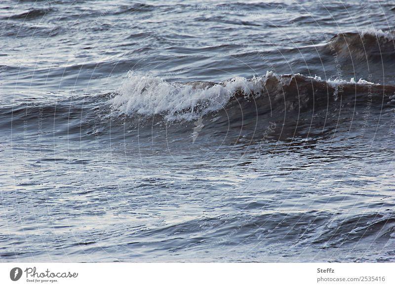 Nordsee immer neu Umwelt Natur Urelemente Wasser Sommer Wellen Bucht Meer Coolness maritim schön blau grau Stimmung Romantik Meeresstimmung Wellenform blau-grau