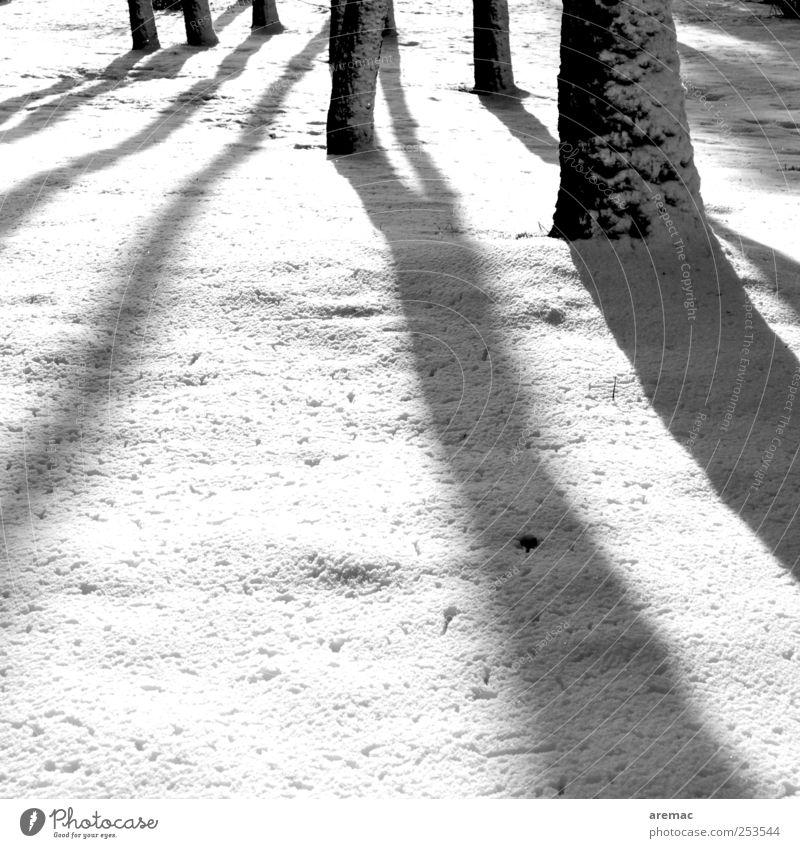 Schattendasein Natur Baum Pflanze Winter ruhig Wald kalt Schnee Landschaft Stimmung Wetter ästhetisch Schönes Wetter