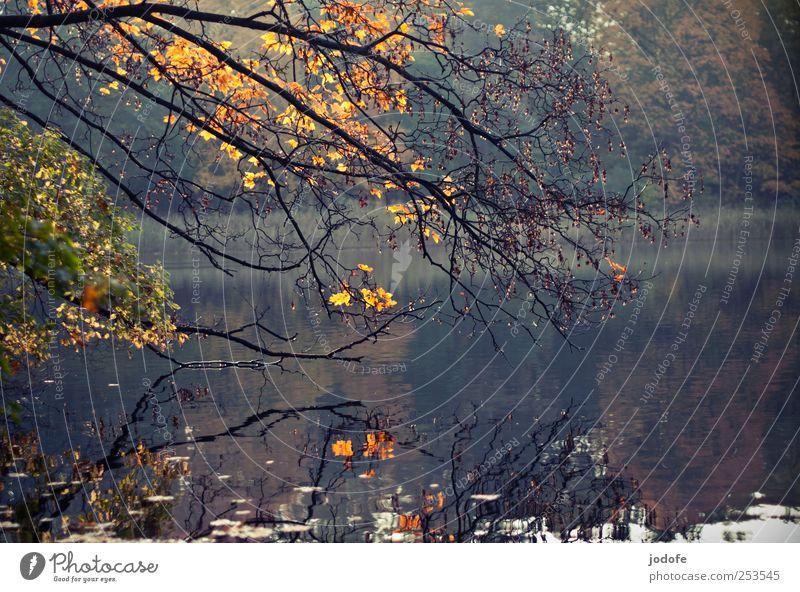 Herbst am See Natur Wasser Pflanze Blatt ruhig Wald gelb Umwelt Landschaft Stimmung gold Ast Herbstlaub kahl