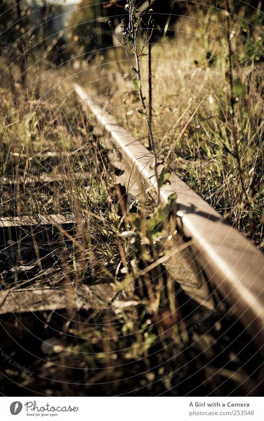 lone railroad Natur alt Pflanze Herbst Umwelt Gras gehen glänzend Eisenbahn natürlich wild Sträucher gruselig Gleise Schönes Wetter Bahnhof