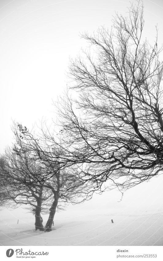I dreamed about last winter Pt.2 Natur weiß Baum Pflanze Winter schwarz kalt Schnee Umwelt Landschaft Eis Nebel natürlich Frost Ast Baumstamm