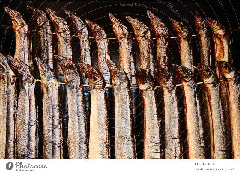 Lecker Aal Lebensmittel Fisch Räucherfisch Räucheraal Tier Totes Tier Schwarm Räucherofen Metall Duft hängen leuchten ästhetisch Zusammensein glänzend lecker