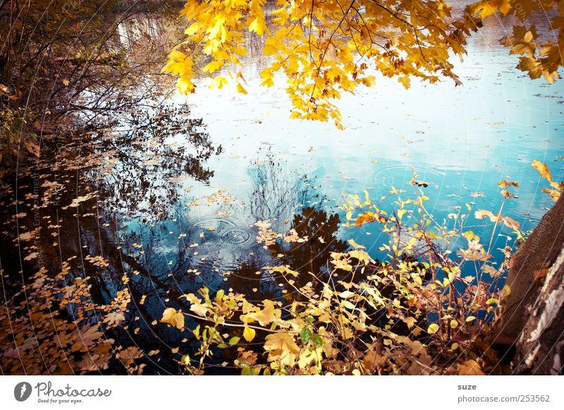 Roibusch Natur Wasser schön Baum Blatt gelb Herbst Umwelt Landschaft See authentisch Idylle Seeufer Schönes Wetter Baumkrone Zweig