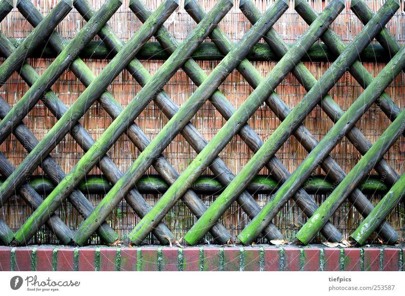 jägerzaun. Moos Holz braun grün picket german Deutschland Hintergrundbild Zaun Holzbrett deutsch bemoost verwittert Gartenzaun Spießer spießig Mensch