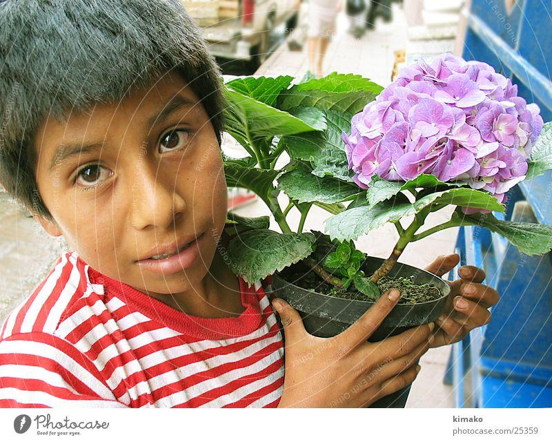 Wünschen Sie Blumen? Kind Porträt flowers Mexiko boy street.