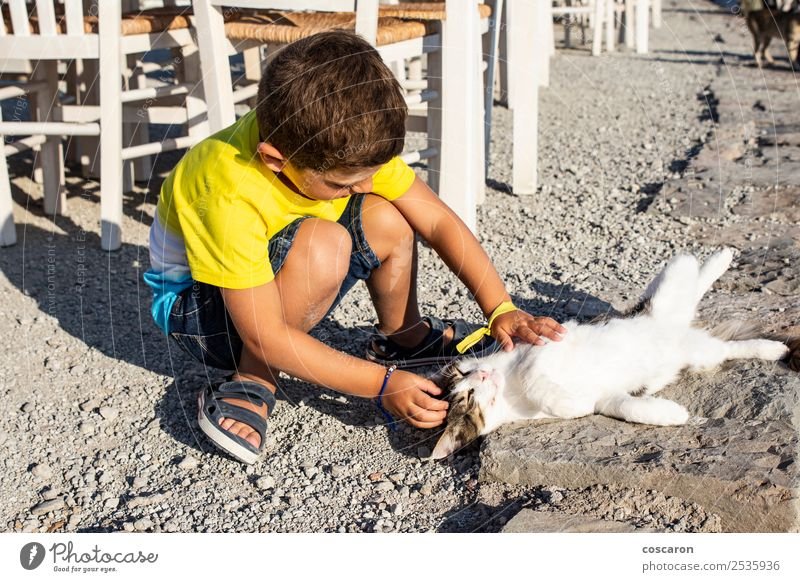 Liebenswerter kleiner Junge, der eine Katze auf der Straße streichelt. Lifestyle Freude Glück schön Freizeit & Hobby Spielen Sommer Kind Mensch Kleinkind