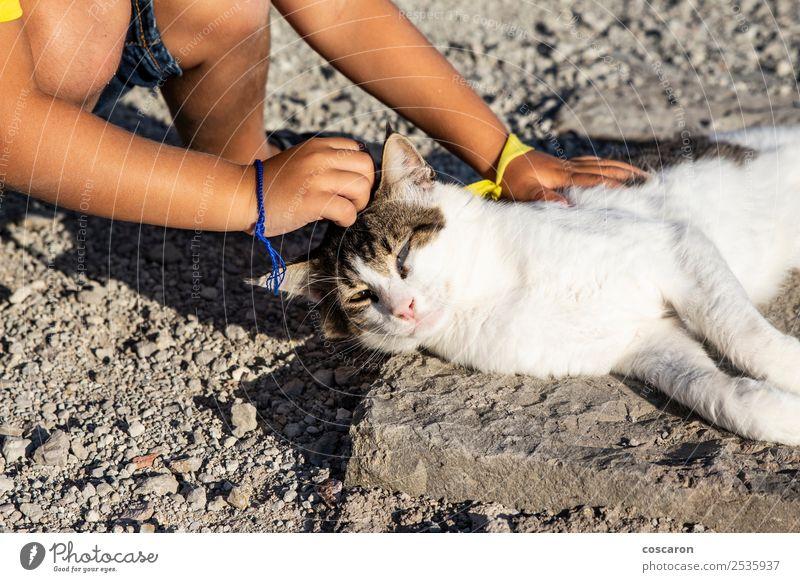 Katze Kind Mensch Natur Sommer schön Hand Tier Freude Lifestyle Liebe Glück Gras Junge klein Spielen