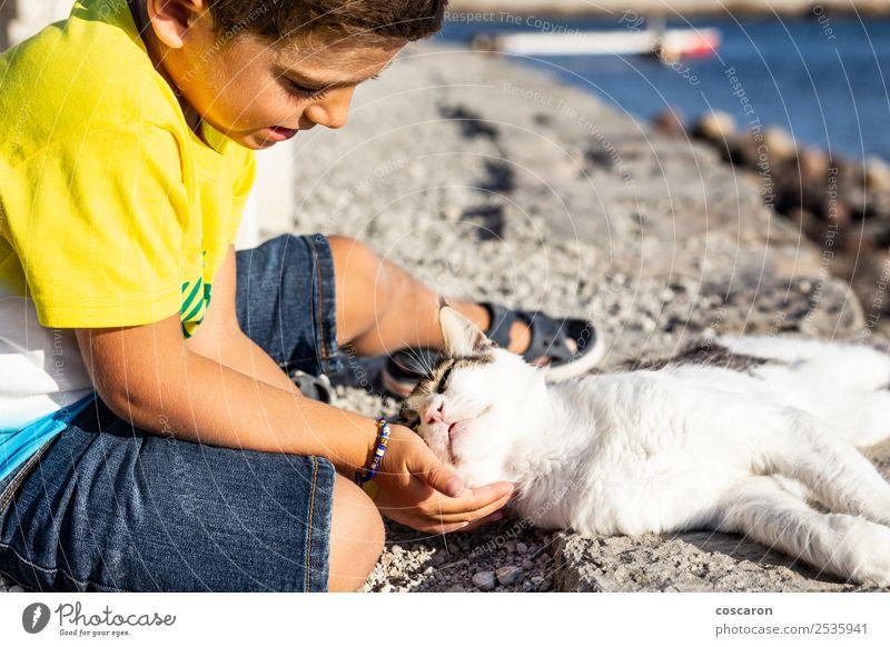 Katze Kind Mensch Natur Sommer schön Hand Meer Erholung Tier Freude Lifestyle Liebe Gefühle Küste Glück