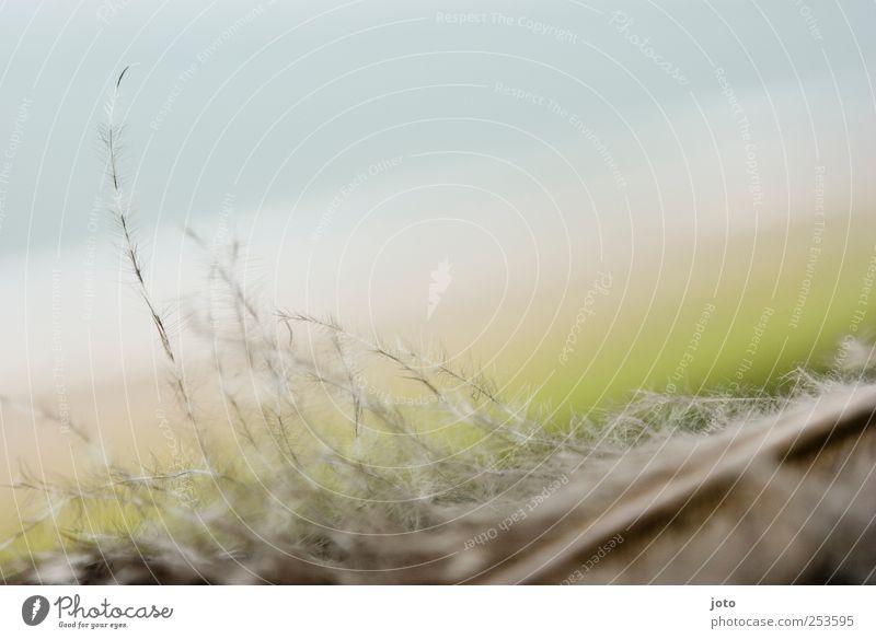 sanft Himmel Natur Meer Strand ruhig Tier Erholung Herbst Gefühle Frühling Luft Zufriedenheit Vogel Hintergrundbild natürlich ästhetisch