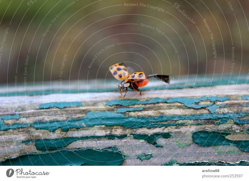 Auf die Plätze, fertig... Herbst Schönes Wetter Park Tier Käfer Flügel Marienkäfer 1 Parkbank fliegen alt frei Unendlichkeit grün rot schwarz Lebensfreude