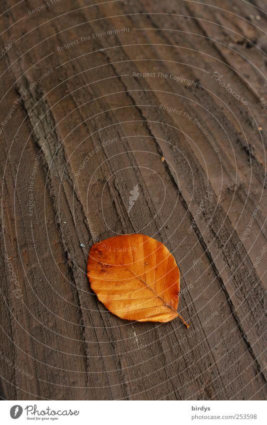 Erdwärme Erde Herbst Blatt leuchten liegen ästhetisch Sauberkeit braun einzigartig Natur ruhig Wandel & Veränderung Buchenblatt welk Herbstfärbung Herbstlaub