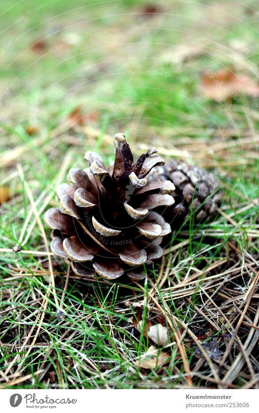 Hallo im Rücken Leben harmonisch Sinnesorgane Erholung Meditation Garten Dekoration & Verzierung Umwelt Natur Pflanze Urelemente Erde Herbst Winter Baum Gras
