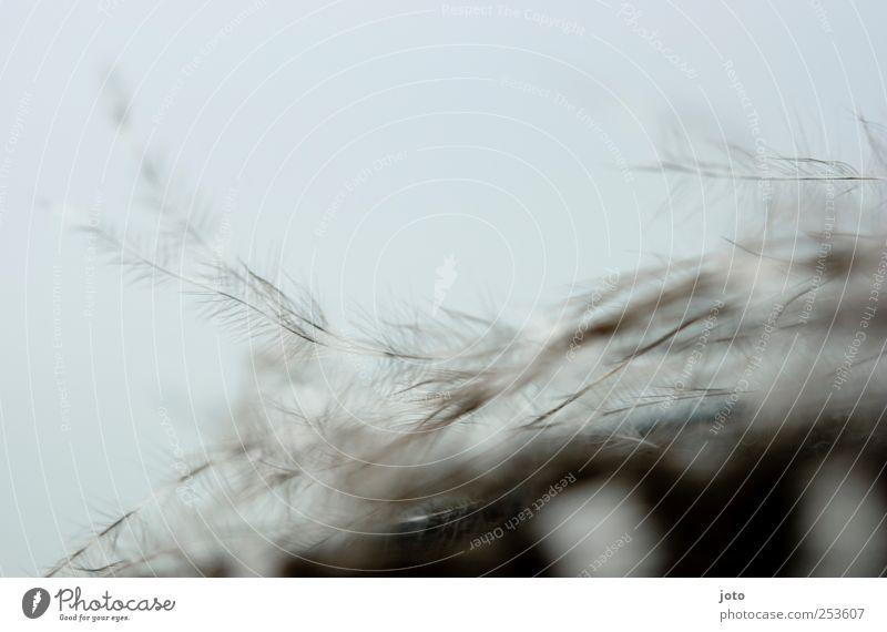 leichtigkeit Natur Tier Himmel Winter ästhetisch Erholung Zufriedenheit Leichtigkeit Feder zart weich sanft fliegend Luft Vogel Hintergrundbild hell fein