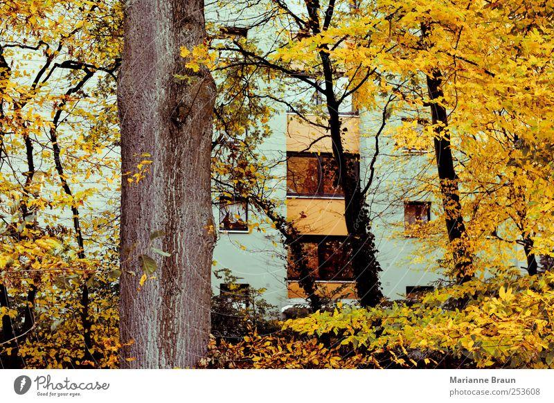 Herbstfarben Natur grün Baum Blatt Haus gelb Farbe Herbst Fenster grau Gebäude Fassade Hochhaus Jahreszeiten Baumstamm Herbstlaub