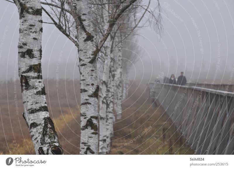 Holzsteg am Federsee - # 30 Tourismus Ausflug Mensch Herbst schlechtes Wetter Nebel Baum Birkenallee Moor Sumpf Heide Holzstruktur Erholung grau Stimmung ruhig