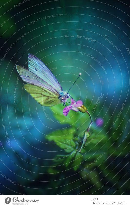 Verzauberte Schönheit Natur Pflanze Tier Frühling Sommer Blume Garten Schmetterling 1 Blühend Duft fliegen Beginn ästhetisch einzigartig Farbe Idylle Umwelt