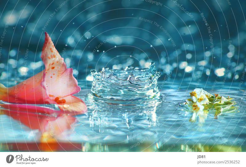 Sommerblubb Wasser Wassertropfen ästhetisch Wellness schön frisch rein Blütenblatt Blume blau rosa Farbfoto mehrfarbig Studioaufnahme Makroaufnahme Experiment