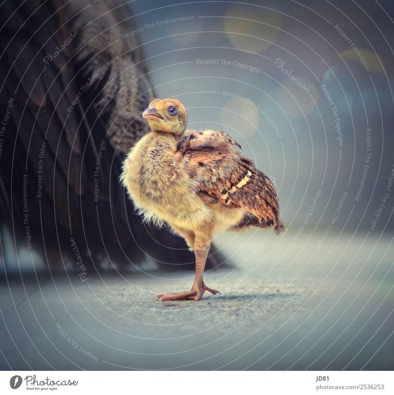 Kleiner Star Tier Wildtier Vogel Tiergesicht Flügel Zoo 1 2 stehen elegant exotisch Freundlichkeit Gesundheit schön natürlich Neugier niedlich positiv wild blau