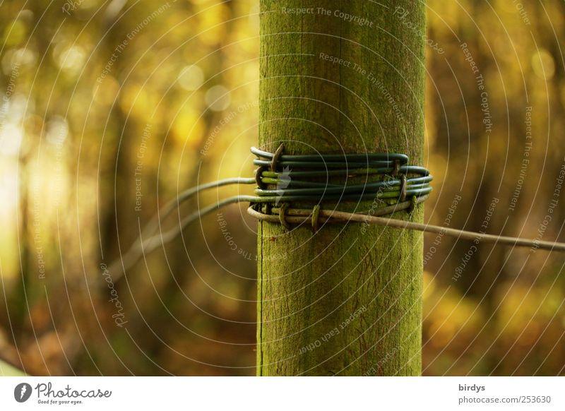 Eingewickelt Natur Herbst Wald einzigartig Zaunpfahl umwickelt Drahtzaun grün moosgrün gespannt Rundholz Holzpfahl Farbfoto Gedeckte Farben Außenaufnahme