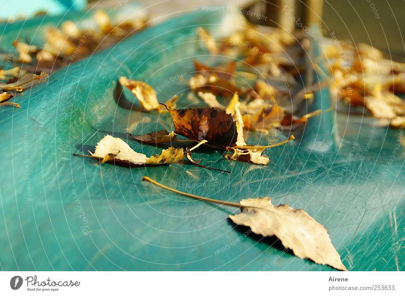 Nachsaison Natur blau Pflanze Strand Blatt Einsamkeit Herbst See braun gold warten natürlich Schönes Wetter Seeufer Gelassenheit türkis