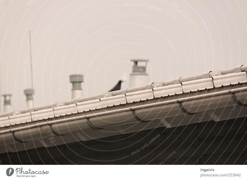 Vogelfrei weiß schwarz Haus Tier oben grau Stil Sicherheit trist Dach Schornstein Antenne hocken Dachrinne Regenrinne