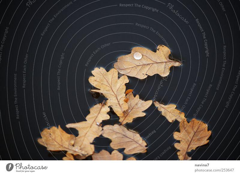 Tropfenfänger Wasser Blatt ruhig schwarz Herbst gold Wassertropfen Teich