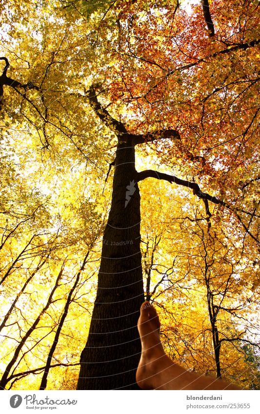 """""""auf dem Holzweg!!"""" Mensch Natur Baum Ferien & Urlaub & Reisen Blatt Wald gelb Herbst Wege & Pfade Beine Fuß Kraft gold gehen maskulin"""